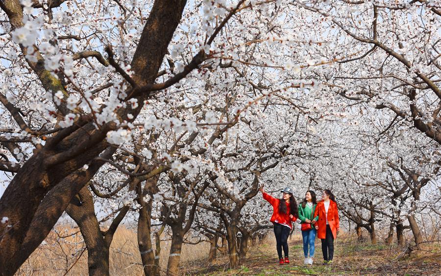 春回大地景如画
