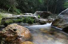 山林溪水清澈見底
