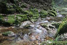 山間小溪靜靜流