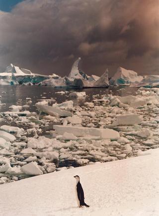 遺世獨立:發現南極之美