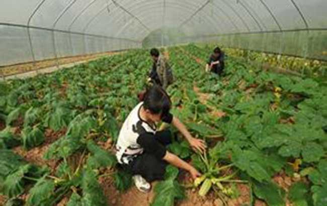 """皖3.3萬個新型農業主體享受""""直通式""""氣象服務"""