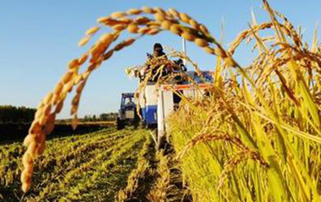 """安徽今年開發推廣産量價格等新險種服務""""三農"""""""