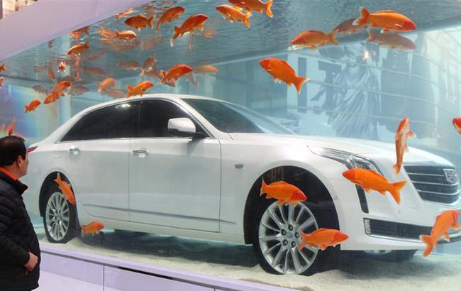 上海街頭一輛豪車泡進魚缸 驚呆路人