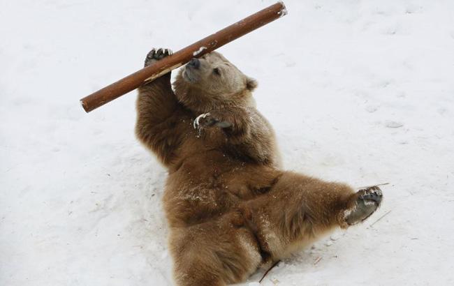 """俄羅斯""""功夫熊""""走紅 舞棍有模有樣"""