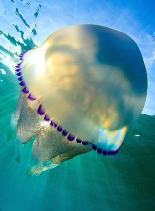 西班牙攝影師拍海中水母的夢幻舞姿