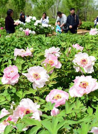 植物園裏踏春賞花