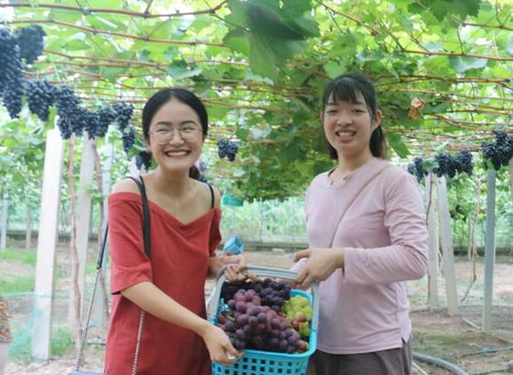 八月葡萄香滿天