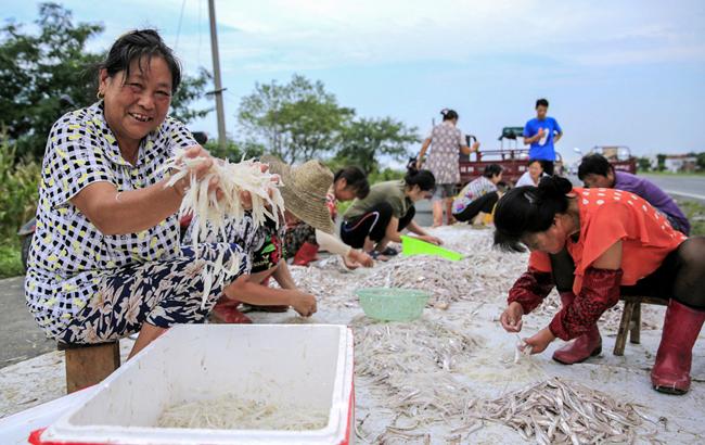 巢湖魚米鄉 漁民捕魚忙