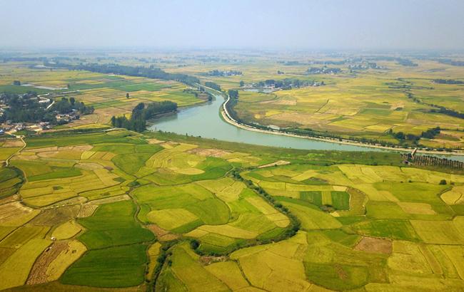 航拍:金色稻田喜豐收