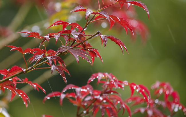 秋分秋雨卷珠簾