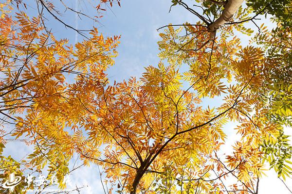 送你这张合肥赏秋地图,一定要收好!