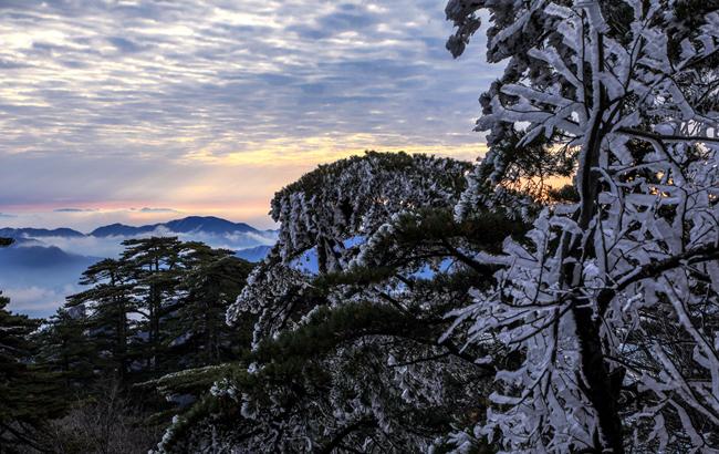 玉樹瓊枝作煙蘿 黃山出現今冬第一場霧凇