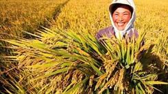 淮南多措並舉落實稻谷收購政策
