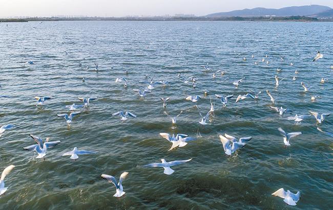 候鳥翔集黃陂湖