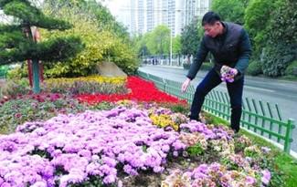 合肥政務區街頭鮮花3個月被捧走上千盆