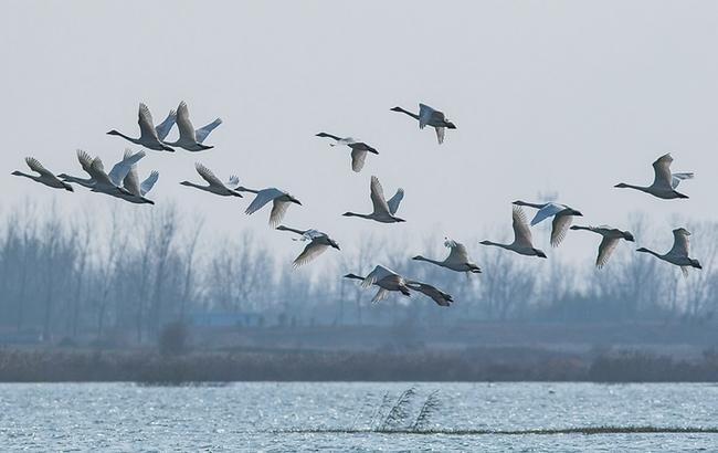 江淮生态美 候鸟蹁跹至