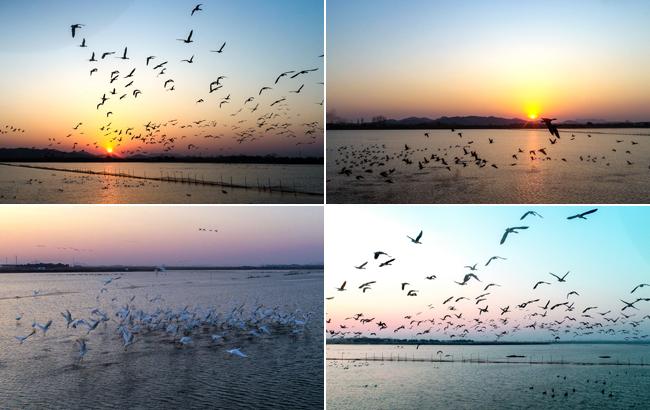 千鳥翔集撥湖面 水天相接映晚霞