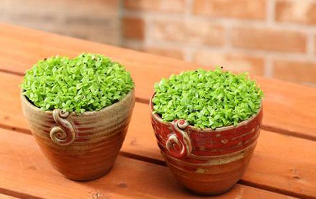果籽DIY,在冬天种下一抹新意的绿