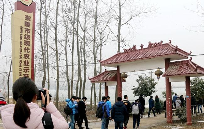 【网络媒体走转改】凤阳县东陵村农村合作社带动农民致富奔小康