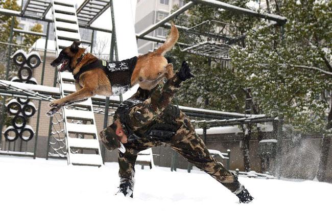 萌犬·奇兵·戰友