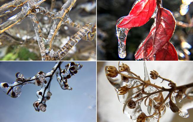 雪後琉璃別樣美 滿山開盡冰淩花
