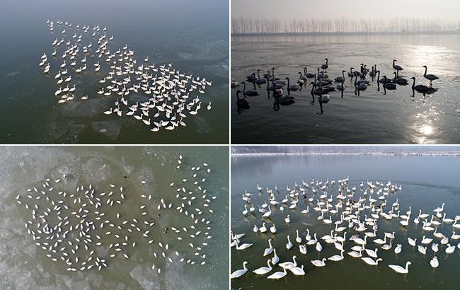世界濕地日:生態修復濕地美 候鳥翩翩如約歸