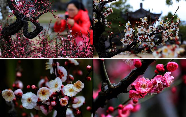 朵朵梅花映墨痕 但留清香滿乾坤