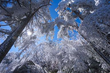 初春罕見霧凇雲海 黃山雪霽美景如畫
