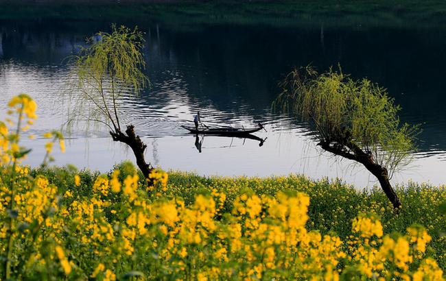 春波蕩漾山水間,菜花香裏看豐年