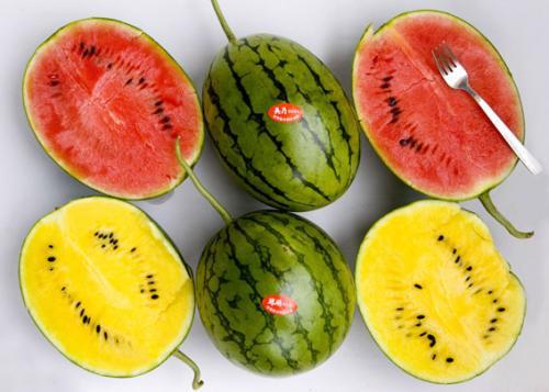 安徽新育瓜菜新品種100多個 推廣逾2000萬畝創效百億元