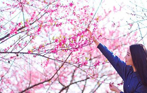 滿樹和嬌爛漫紅 萬枝丹彩灼春融