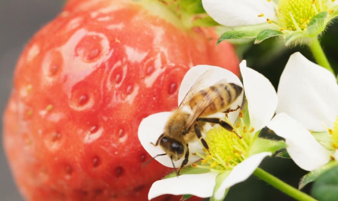 《四季味道》草莓