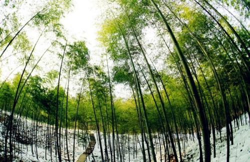 合肥重点生态区域全面推进林长制