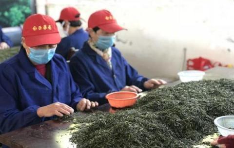 """安徽庐江做好""""茶文章"""" 巧打文化旅游牌"""