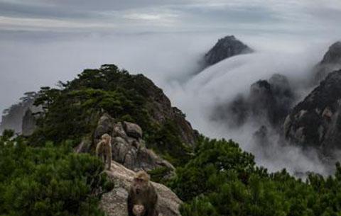 旅遊法實施觀測點落戶黃山