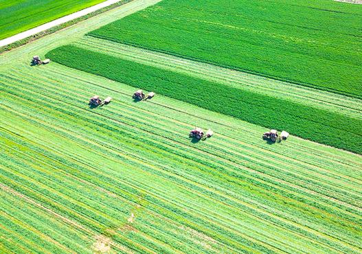 航拍:萬畝大地披綠裝 春來田間收割忙