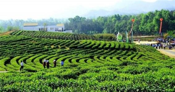 第七屆大別山(六安)山水文化旅遊節暨第四屆六安茶谷開茶節開幕