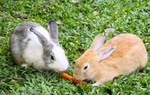 安徽潛山縣或為鼠類和兔形類動物祖先的發源地