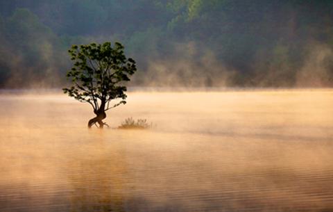 黄山奇墅湖雾气氤氲 宛若仙境