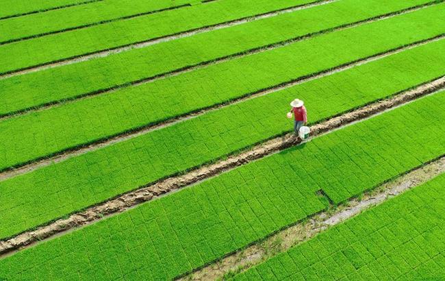 規模化育秧助農增收