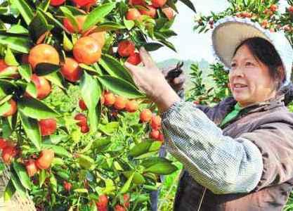 安徽各地依托自然资源优势 大力发展优质特色农产品