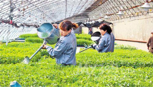 今年安徽将培育新型职业农民4.7万人