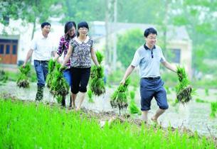 安徽省夏种基本结束 面积减少结构优化