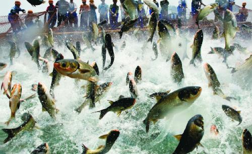 全国首个水产行业省级劳模创新工作室花落安徽