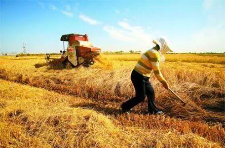 """""""农民丰收节"""":中国奔向现代农业征程的初心"""
