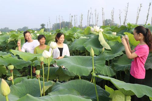 亳州譙城區:發展特色産業 助力脫貧攻堅