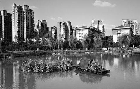 合肥建成首個水上花境