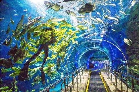 走,暑假我們去海洋館看看