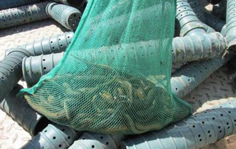 """黃山兩村民抓45條""""泥蛇""""被判拘役6個月緩刑10個月"""