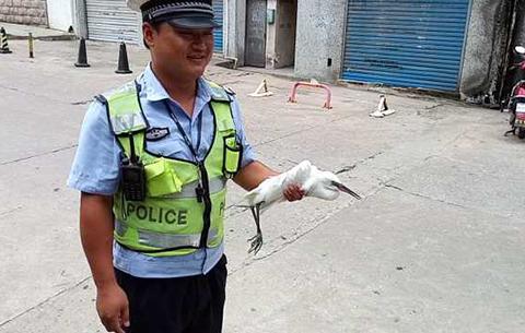 野生白鹭受伤 警察蜀黍伸援手
